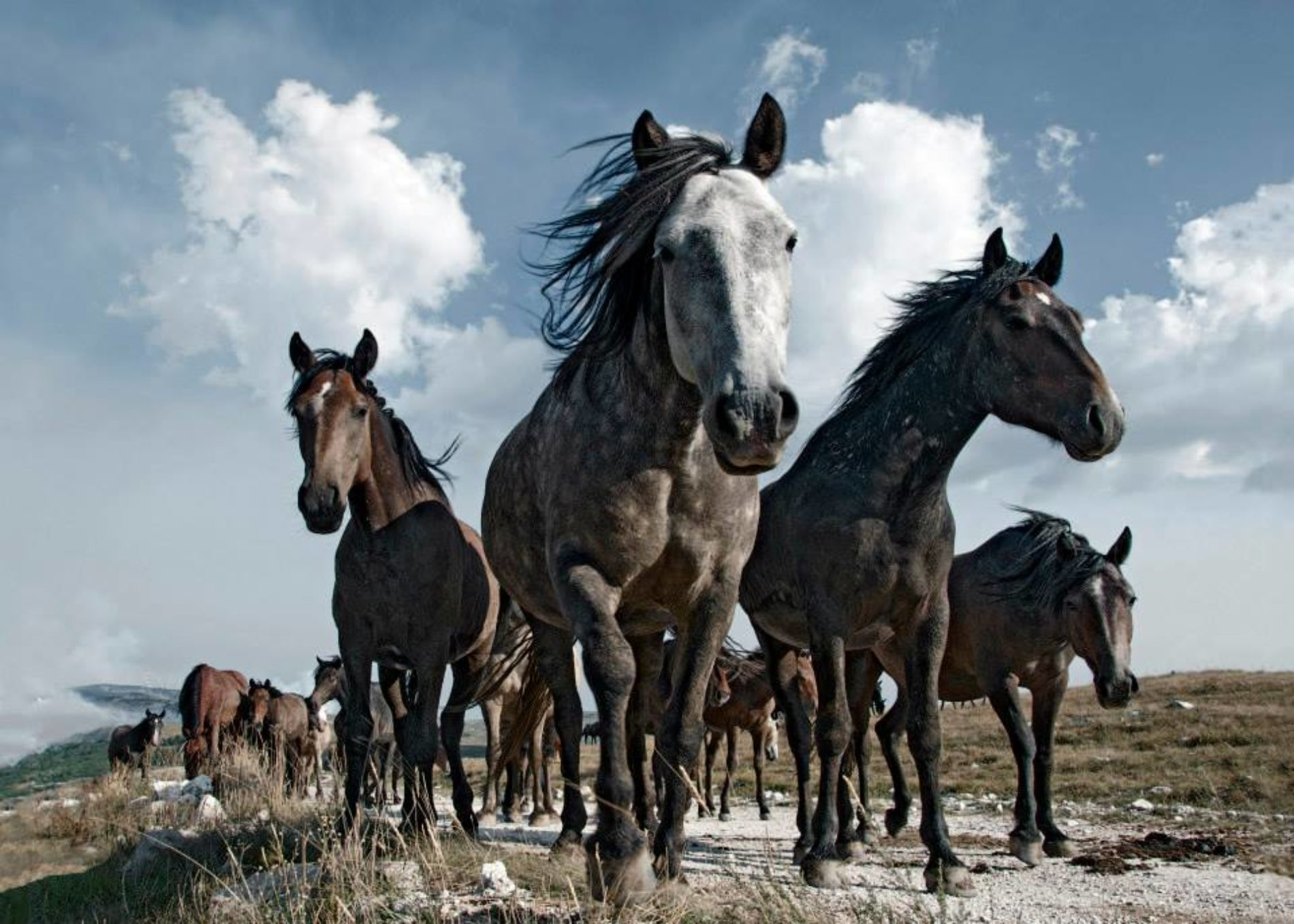 Njegovo veličanstvo – Konj