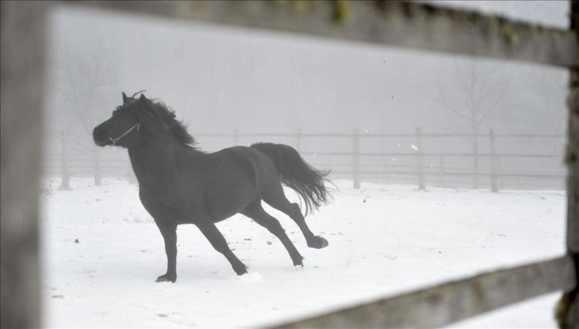 Bosansko-brdski konj: Neosedlani trče livadama iznad Rogatice