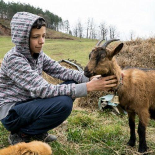 Dječaku Jasminu koji je želio kozu umjesto bicikla ispunila se želja: Presretan sam
