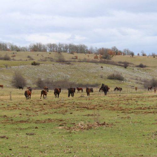 U Sočicu i Dobraču svraćaju samo vikendaši: Sela podivljalih konja na obroncima Romanije