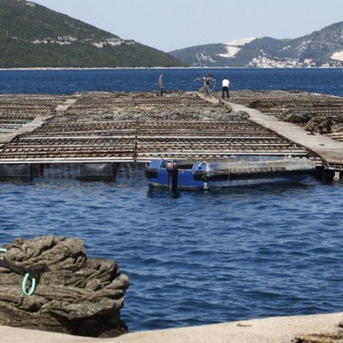 Vlasnici bh. ribogojilišta nemaju potrebu izvoziti ribu