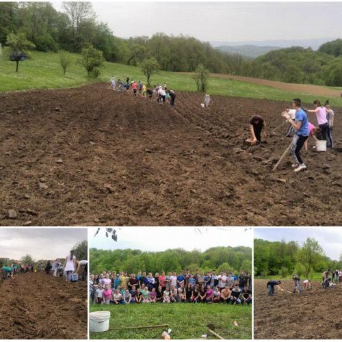 Akcija za svaku pohvalu: Mladi zasijali pet dunuma krompira da finasiraju svoje udruženje