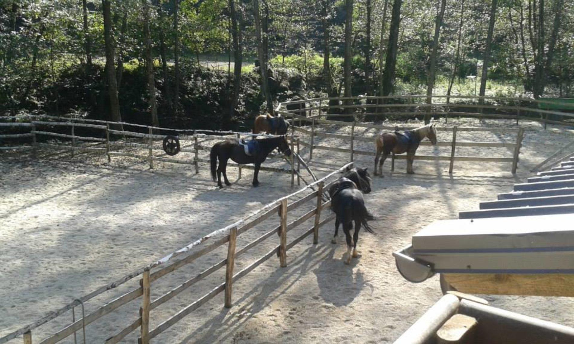 Mirsad se iz Australije vratio u domovinu: Njegov ranč kod Zavidovića posjećuju gosti iz cijele BiH