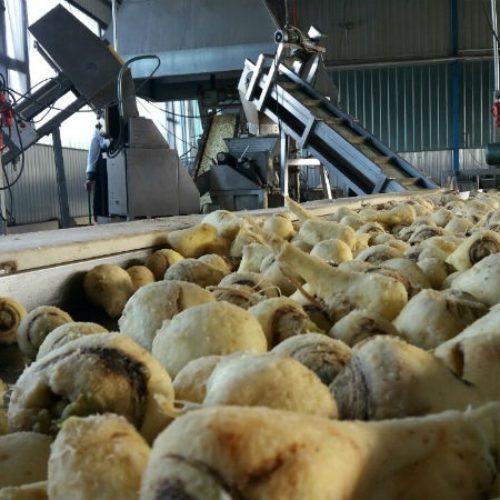 Bingo investirao u Semberku: Fabrika spremna za rad punim kapacitetom