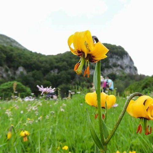 Velika akcija čišćenja naše zemlje: Očistimo planine, očistimo prirodu!