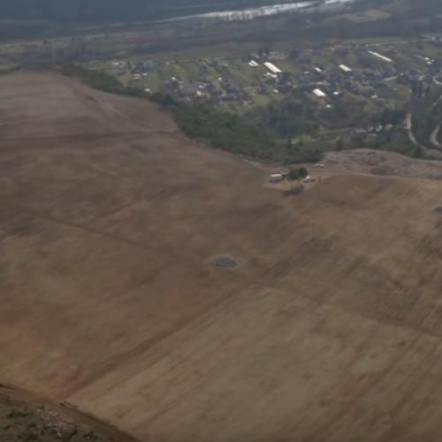 Velike plantaže smilja na jugu zemlje: Višemilionski biznis zahvaljujući aromatičnom ulju