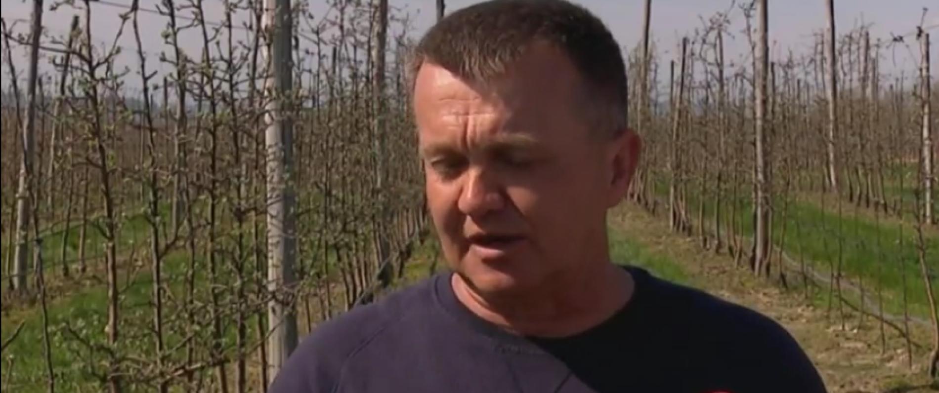 Primjer održivog povratka: Zasadio voćnjak jabuka ; Sav urod plasira na domaće tržište