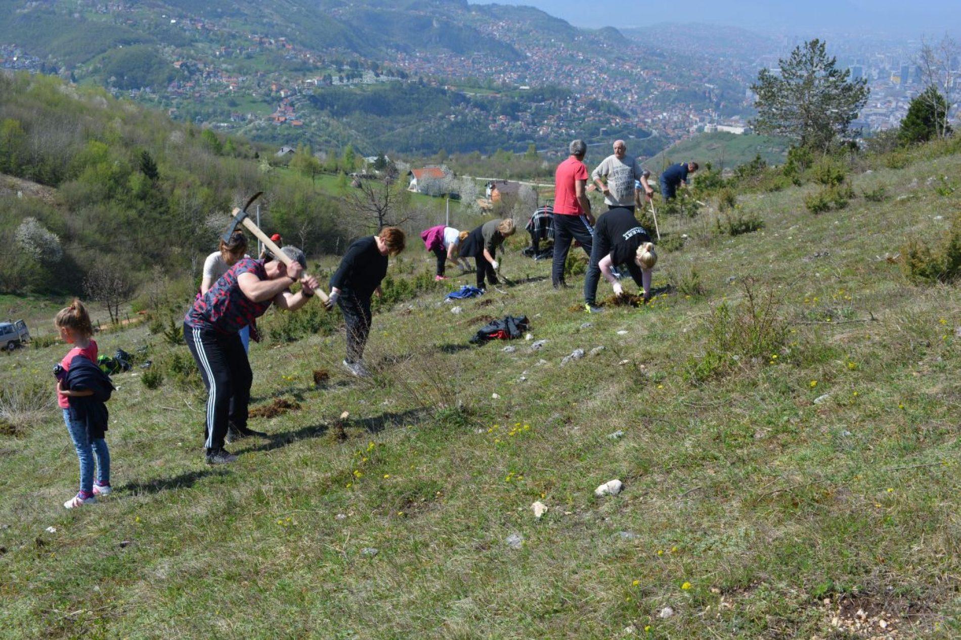 Stari Grad: Na lokalitetu Borije zasađeno 11.000 sadnica crnog i bijelog bora