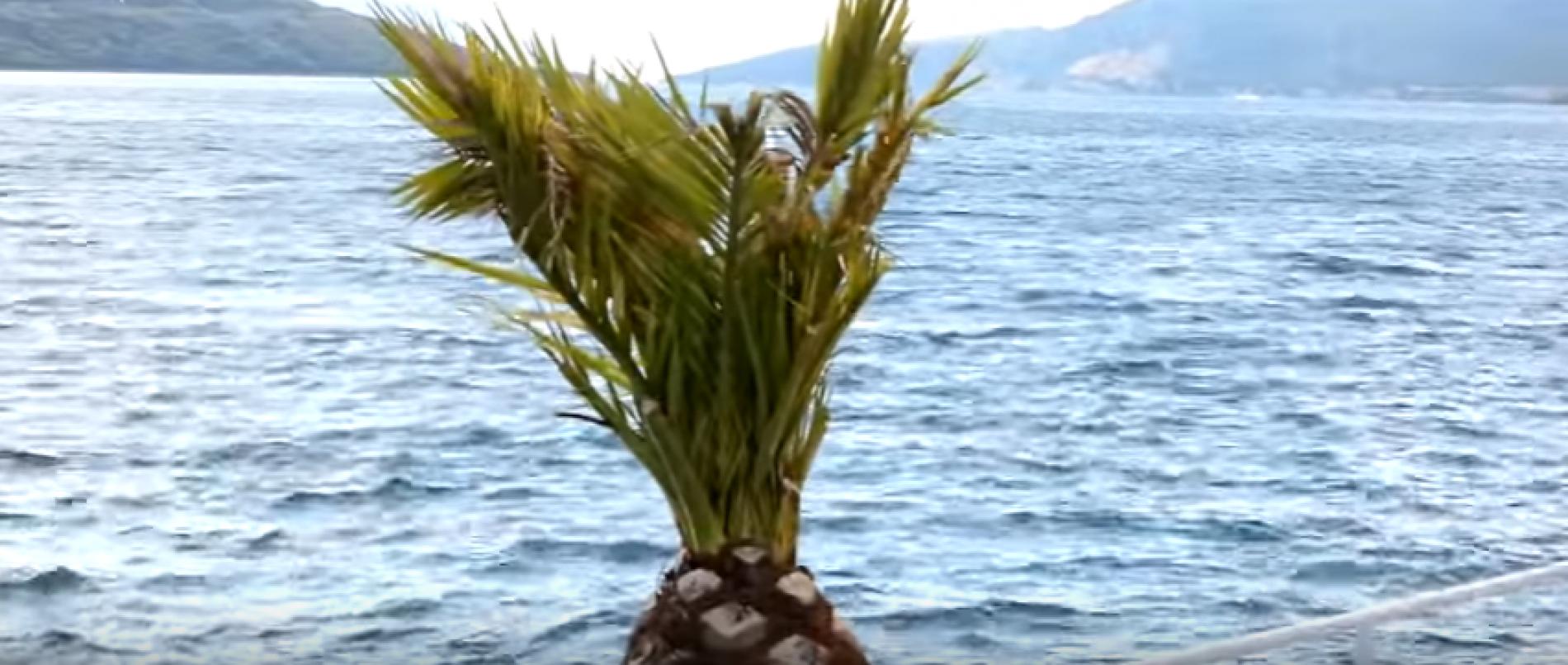 Bosansko more – Neum (VIDEO)