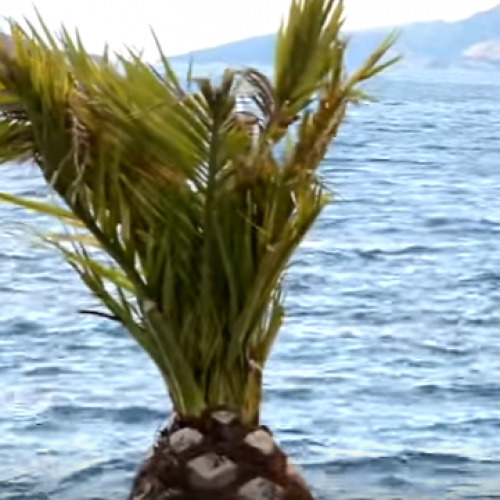 Bosansko more – Neum (VIDEO)