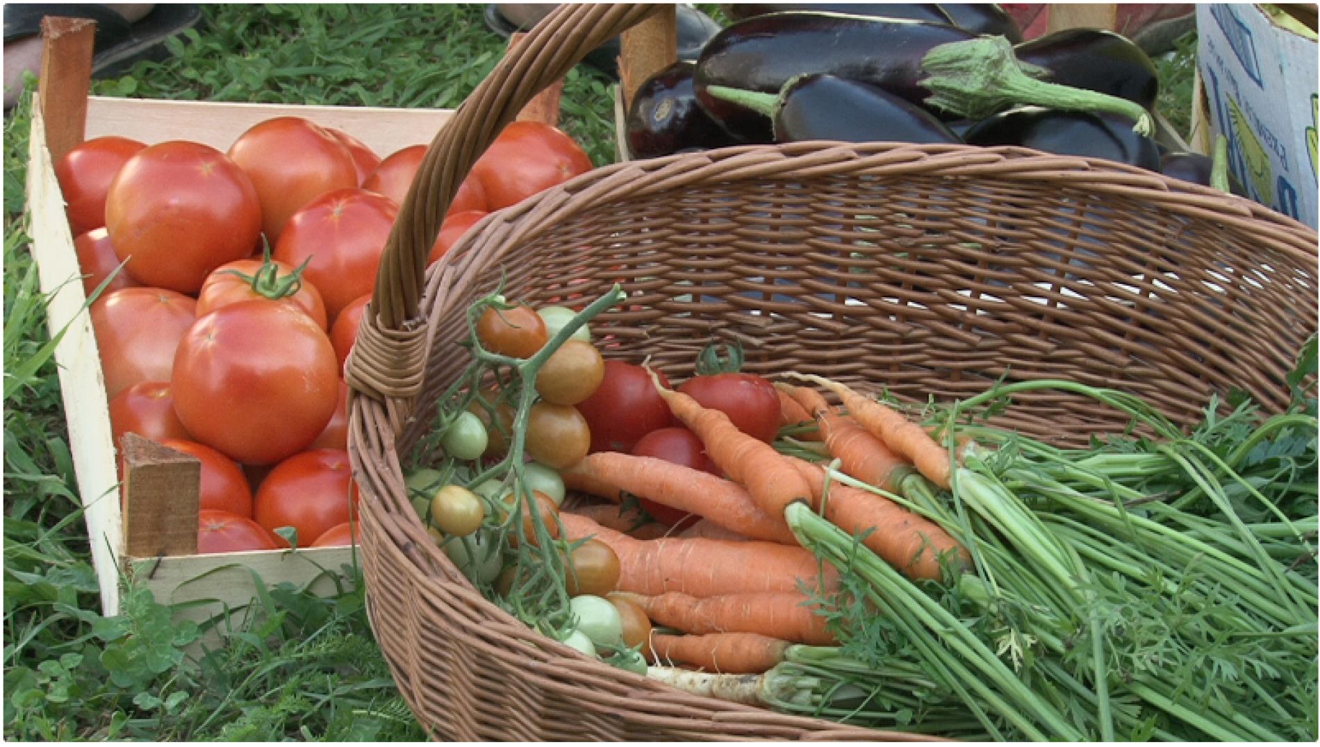 Turci i Azerbejdžanci najavljuju investicije u bosansku poljoprivredu