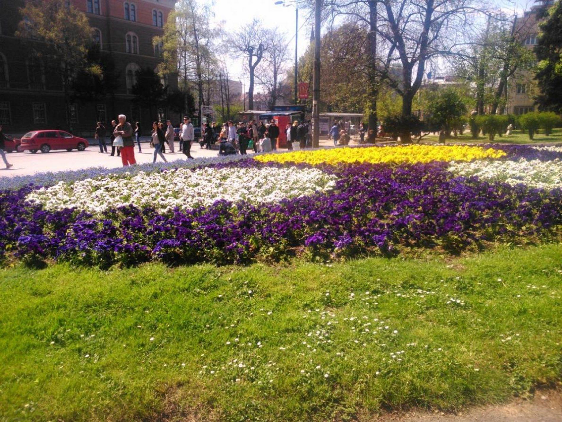 Zelenilo Sarajeva je sve funkcionalnije i ljepše (Foto)