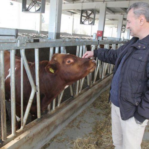 Investitor Arifagić ostaje u Krajini: Norveške krave stižu u Bosanski Petrovac