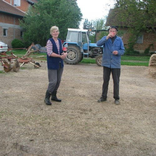Vrijedna porodica Fajković – Proizvedu 400 litara mlijeka dnevno: 'Djeca su nam vrijedna, složni smo i to je ključ uspjeha'