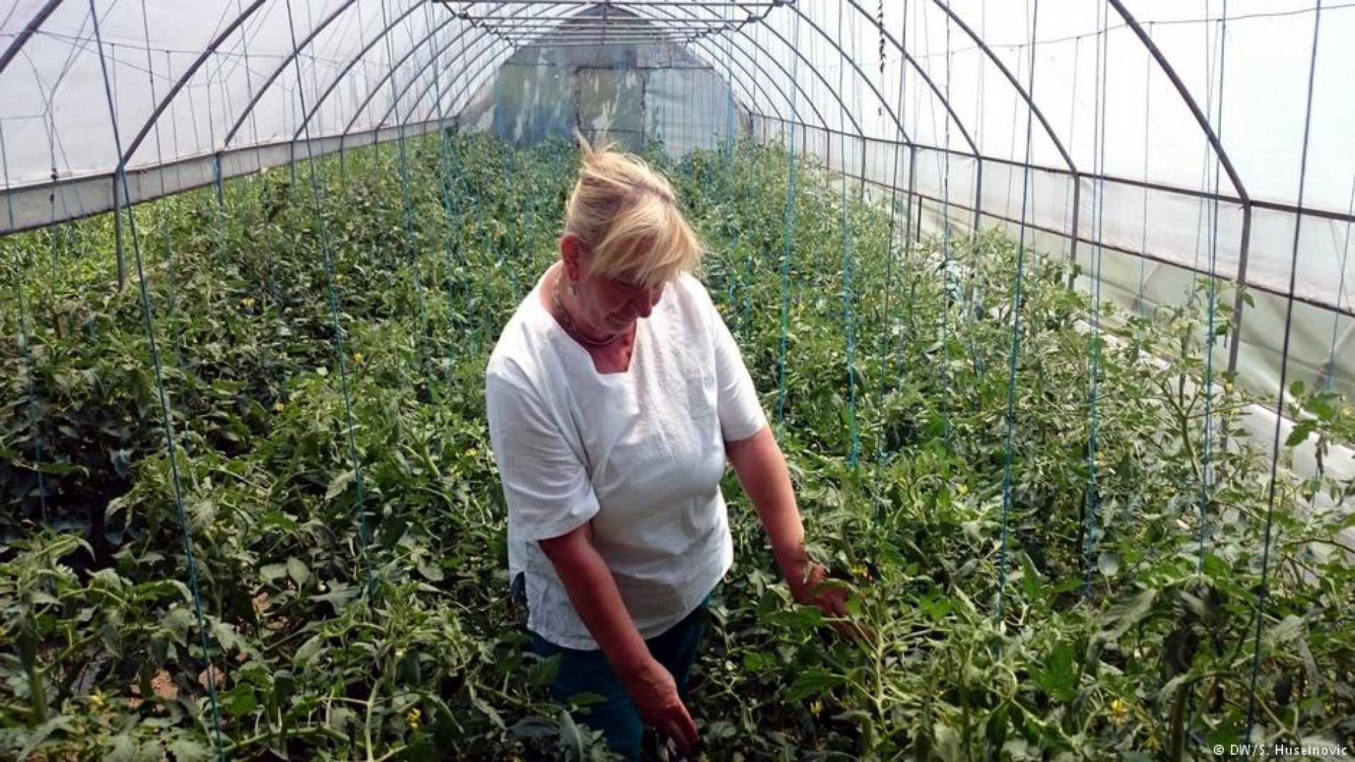 Proizvodnja organske hrane – šansa za Bosnu i Hercegovinu