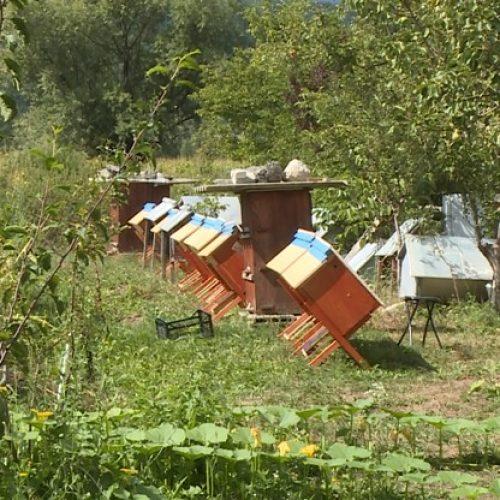 Inovacije: Košnice iz Bihaća jedinstvene u svijetu