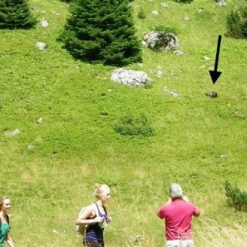 Medvjed i berači borovnica na Zelengori 'postigli kompromis' (FOTO)