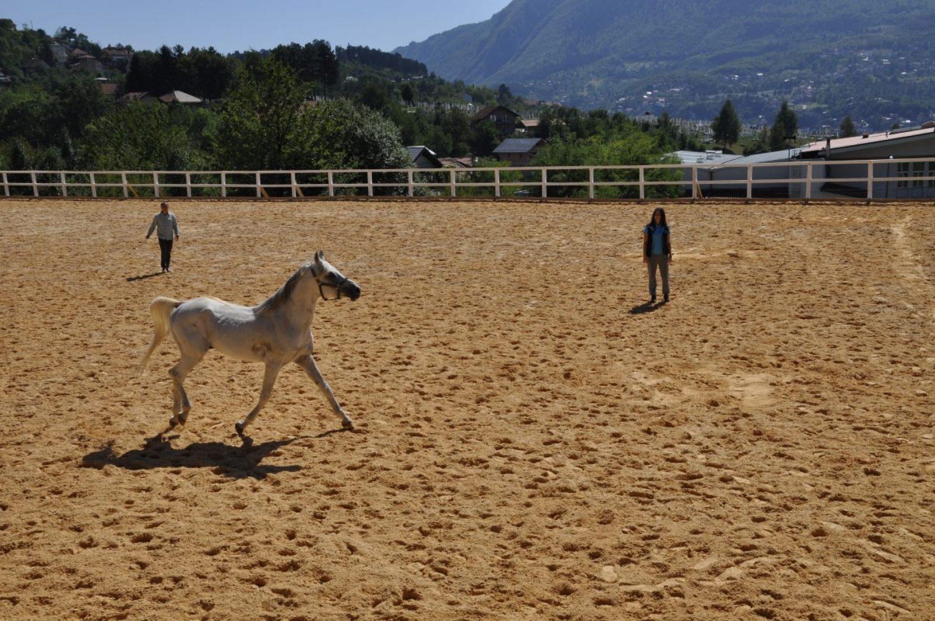 Jahanje konja nova atrakcija u Starom Gradu (FOTO)