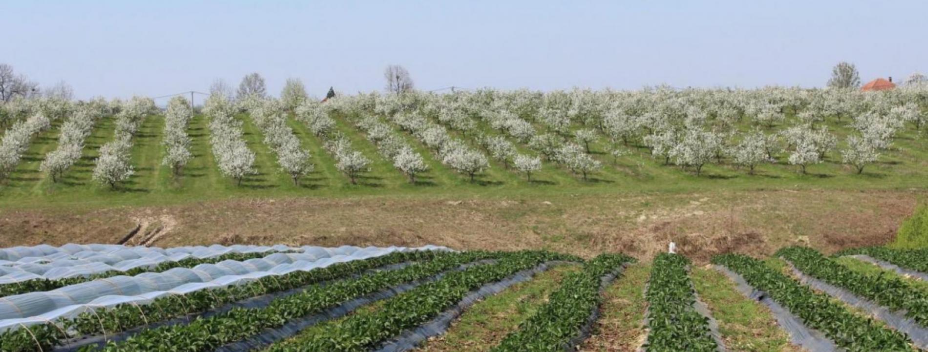 Bosnaplod od domaćih proizvođača otkupio 4.000 tona voća