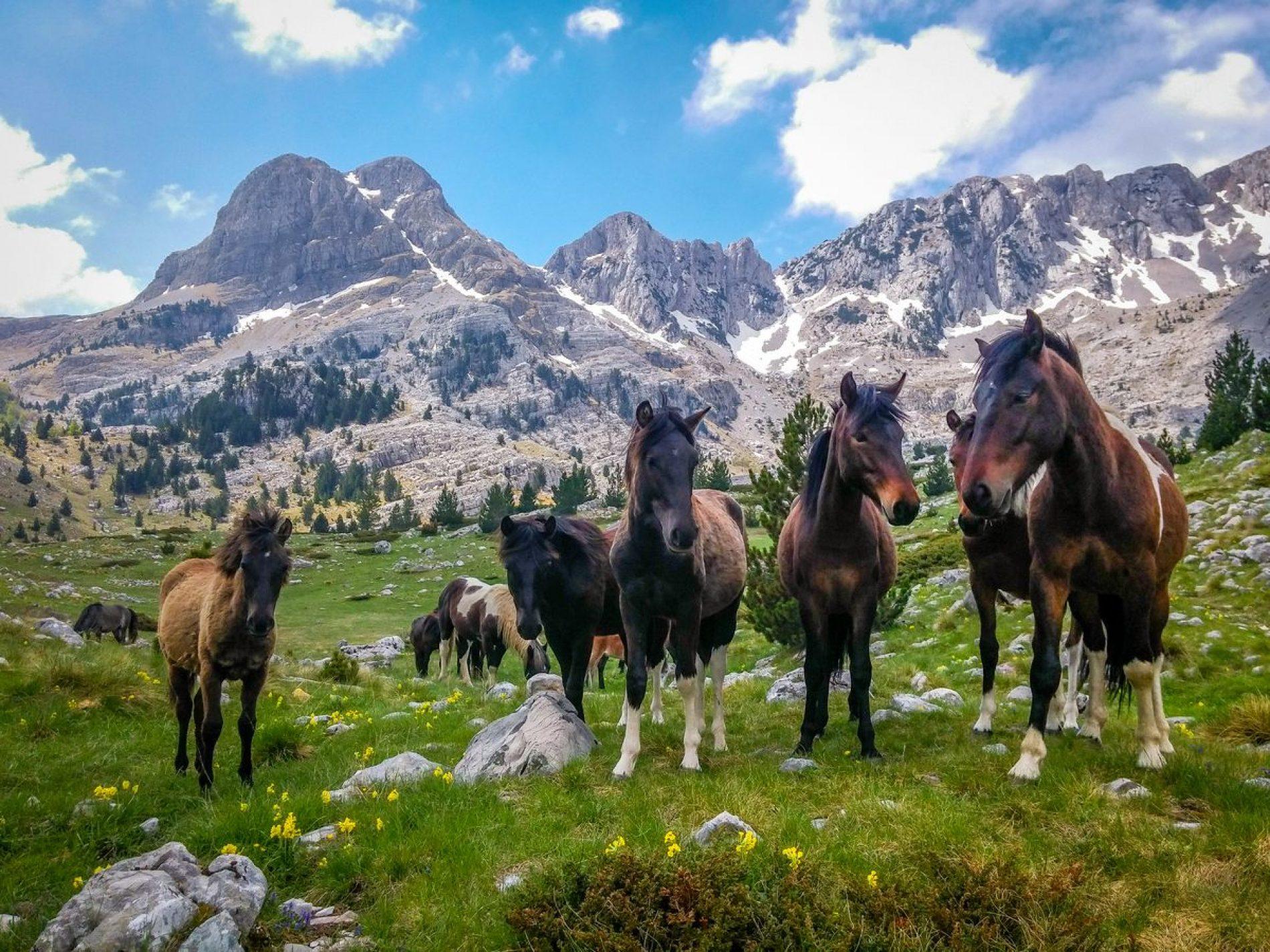 PRENJ – najljepša planina Bosne i Hercegovine