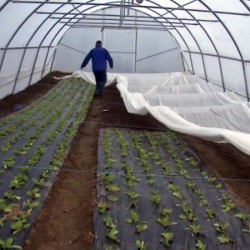 Razvoj plasteničke proizvodnje u Lukavcu, i dodatna zapošljavanja (VIDEO)