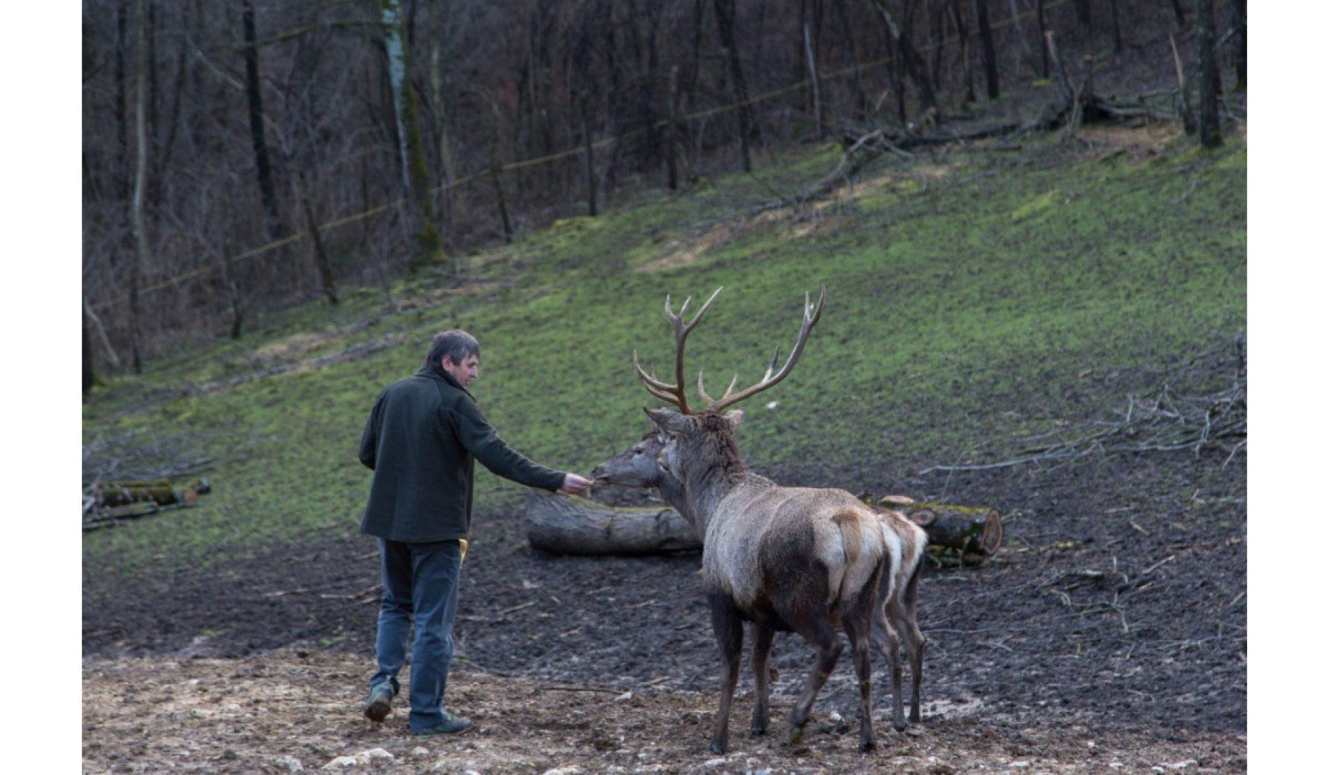 Neobičan ranč u Gornjoj Sanici: Mjesto gdje jeleni jedu iz ruke i odazivaju se na imena