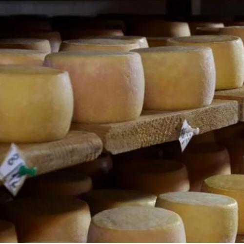 Izvoz mlijeka i mliječnih proizvoda porastao za oko 8 mil. KM: Bosanski sirevi nadaleko su poznati