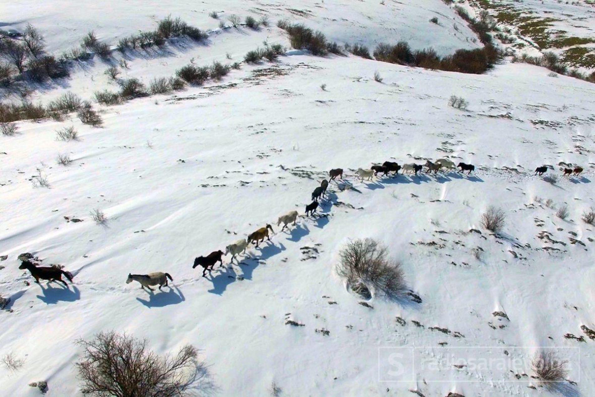 Fascinantan snimak iz zraka: Livanjski divlji konji