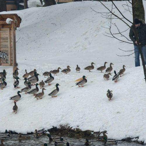 Bihać zimi: Rijeka smaragdne boje i snijeg daju posebnu ljepotu (FOTO)