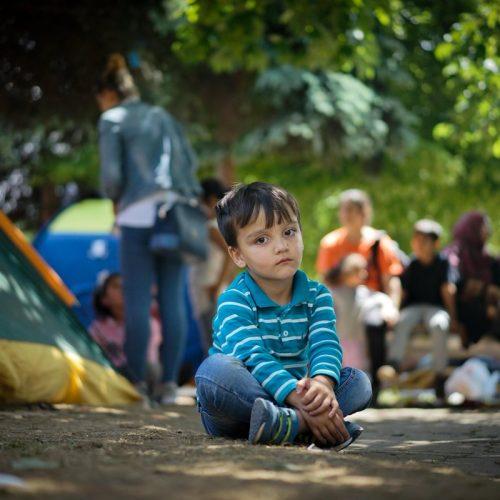 Islamska zajednica u Bosni i Hercegovini izdvojila 100.000 KM pomoći izbjeglicama