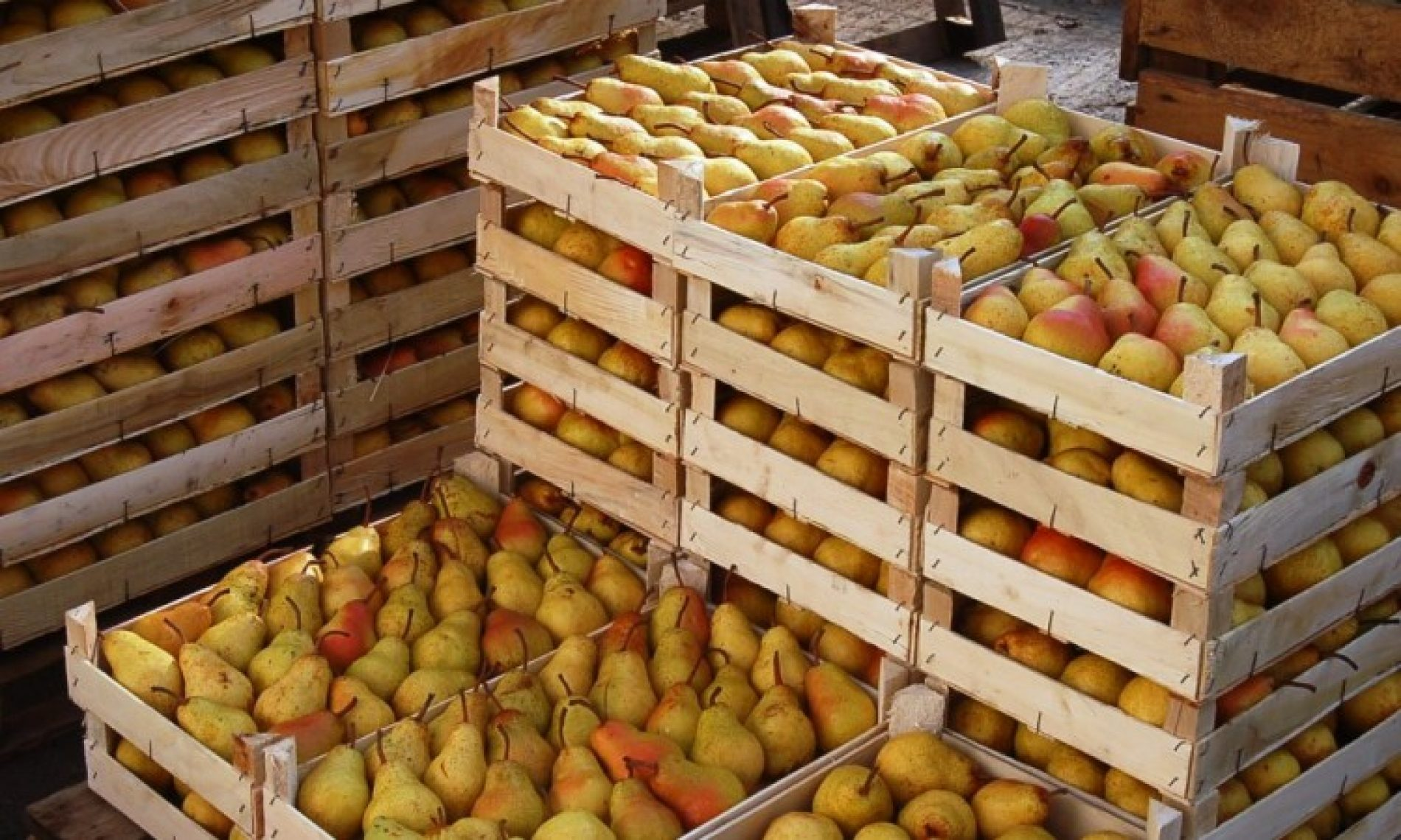 Voćarstvo se isplati: 'Linija voća' iz Brčkog povećala proizvodnju i broj zaposlenih