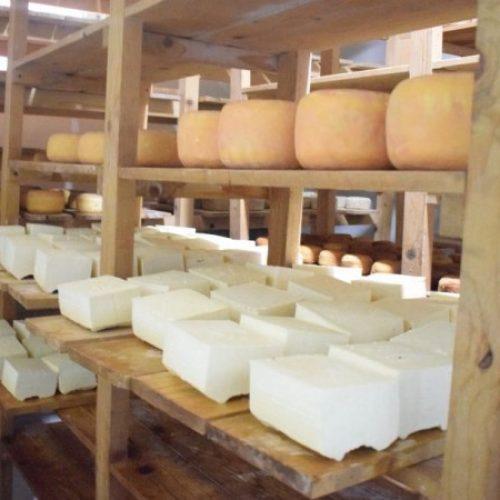 Tešanjski zlatni sir sazrijeva 15 mjeseci, kupci znaju da vrijedi čekati