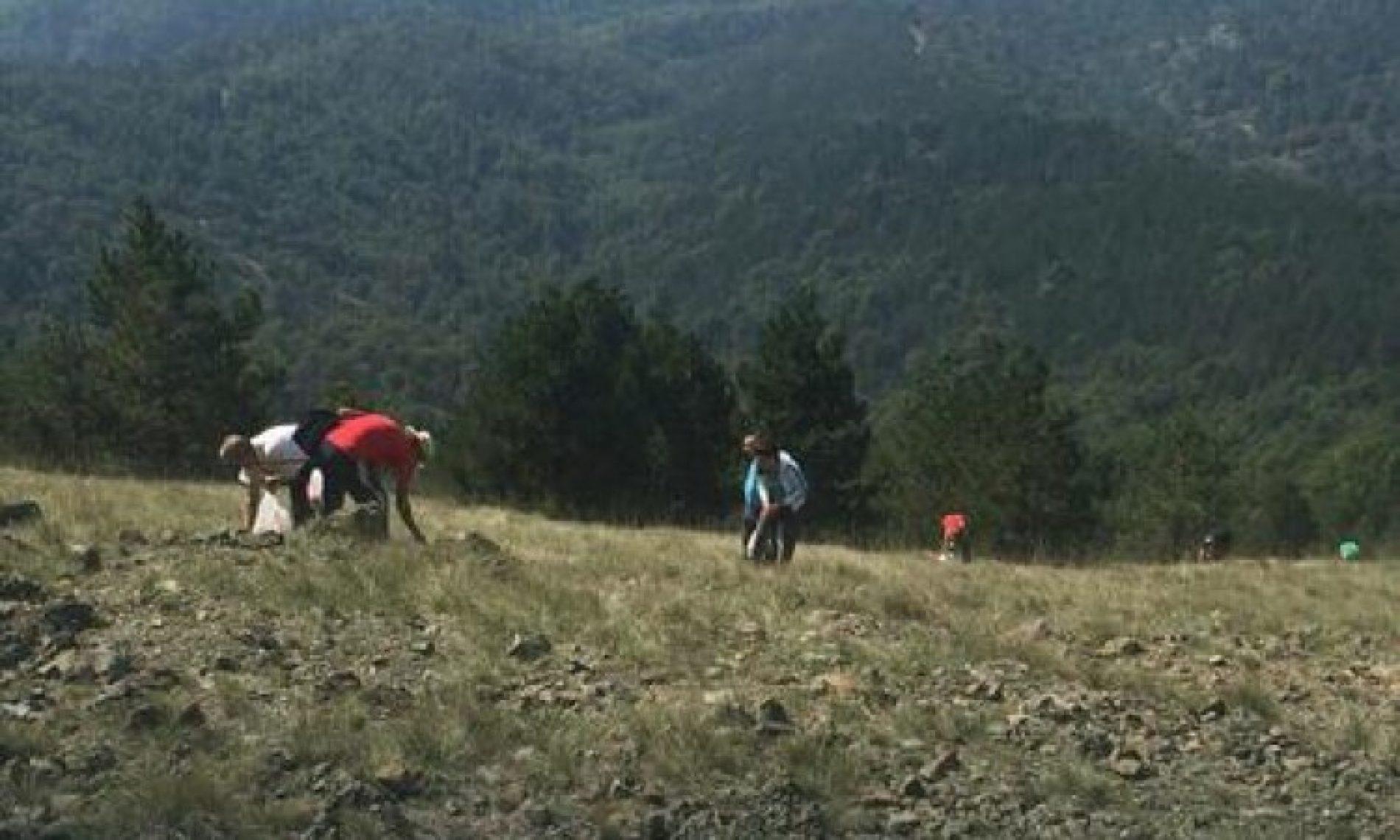 'Branje trave ive na Ozrenu' upisano na listu UNESCO-a