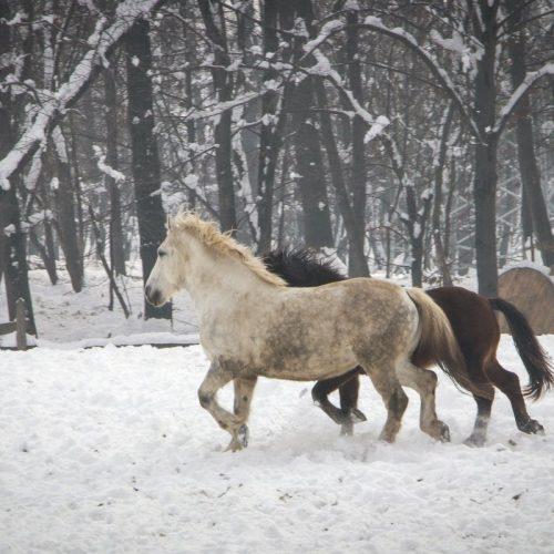 """Konji s ranča """"Zelena dolina"""" kod Prnjavora nižu nagrade"""