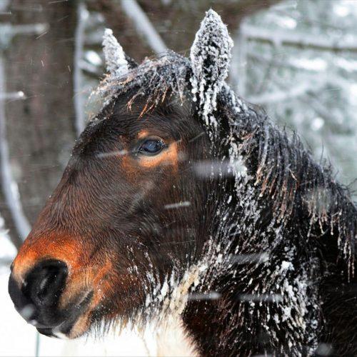 Bosanski brdski konj zaslužuje puno više nego smo mu do sada davali: Ideja za osnivanje Oaze BBK na obali Jablaničkog jezera