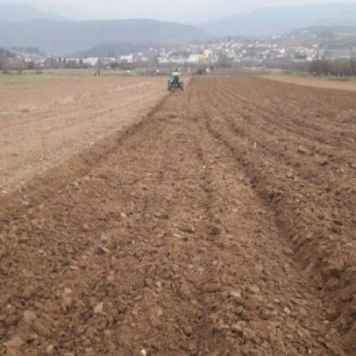 U proljeće počinje uzgoj lješnika na području donjovakufske općine