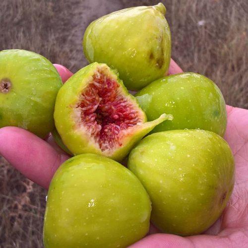 Bosna i Hercegovina: Povećanje proizvodnje smokava, maslina, limuna i mandarina