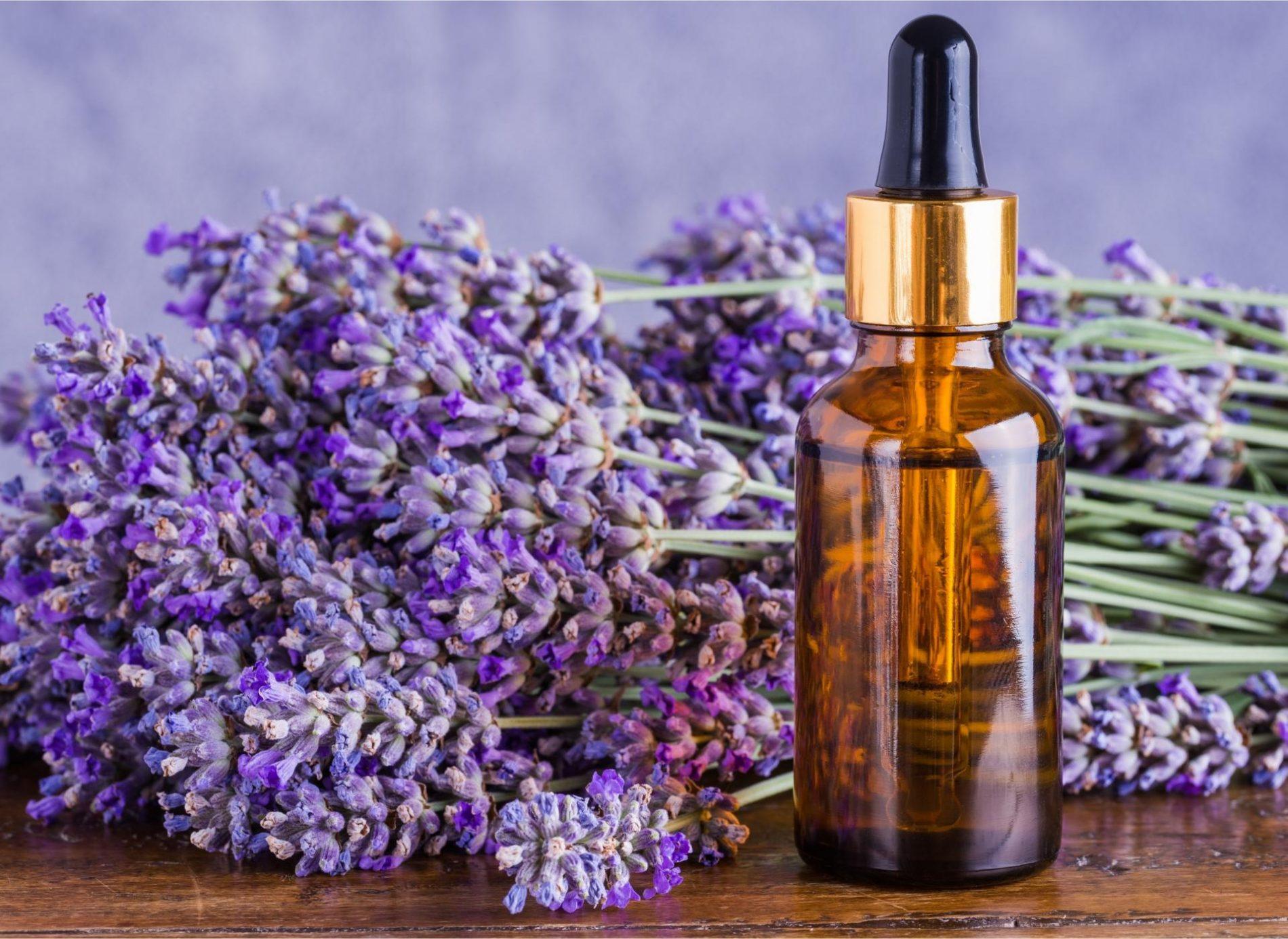 Rast izvoza ljekovitog bilja, eteričnih ulja, šumskih plodova i meda