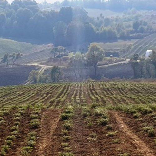 Preduzeće 'Bosna raste organski' lani isporučilo 4 tone osušenog ljekovitog bilja na tržište Evrope