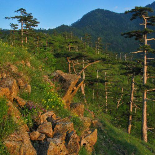 Zaštićeni pejzaž Konjuh: Zelena oaza idealna za odmor i uživanje