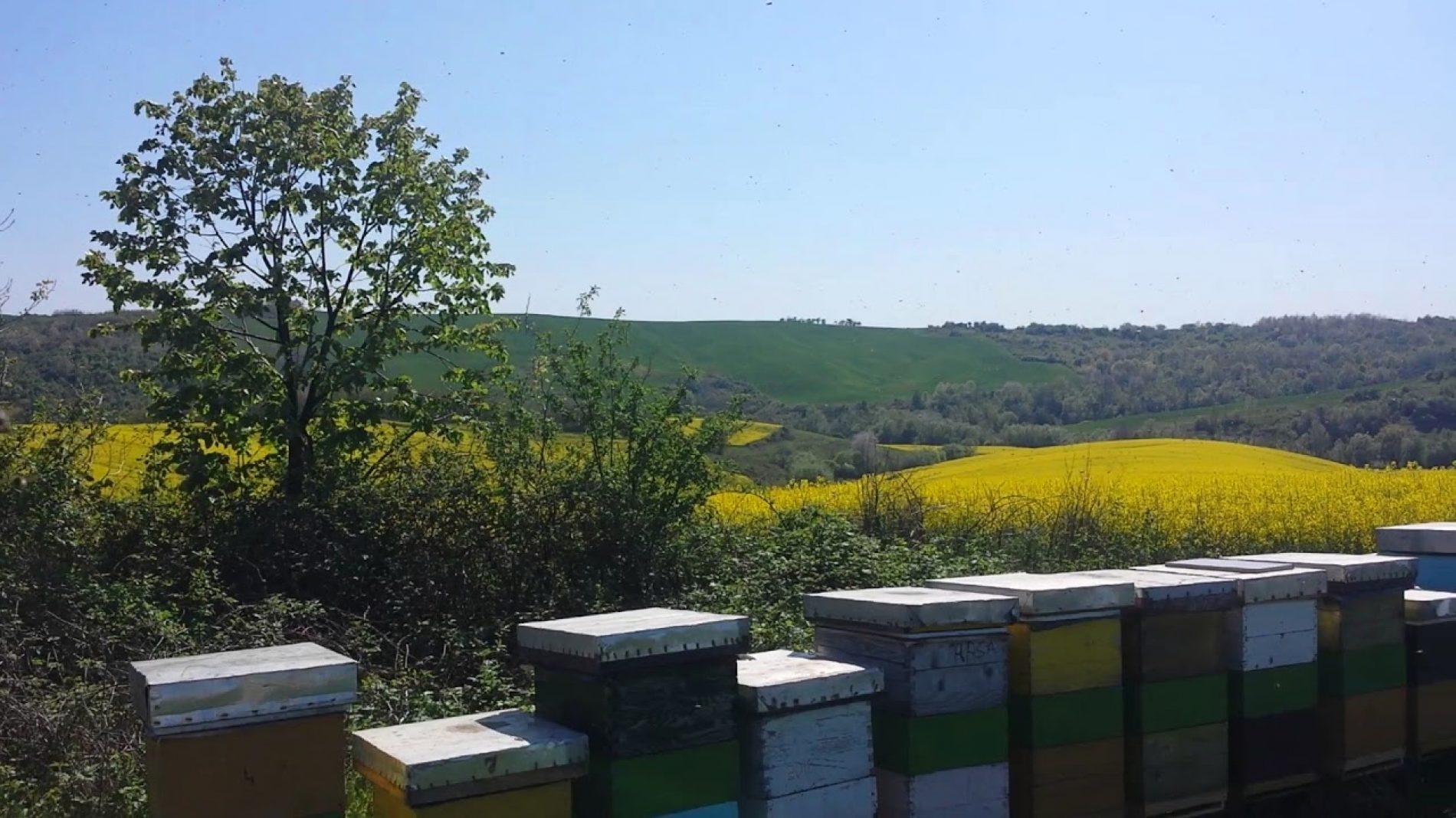 Pčelari i malinari zajedno zaštitili pčele u Fojnici