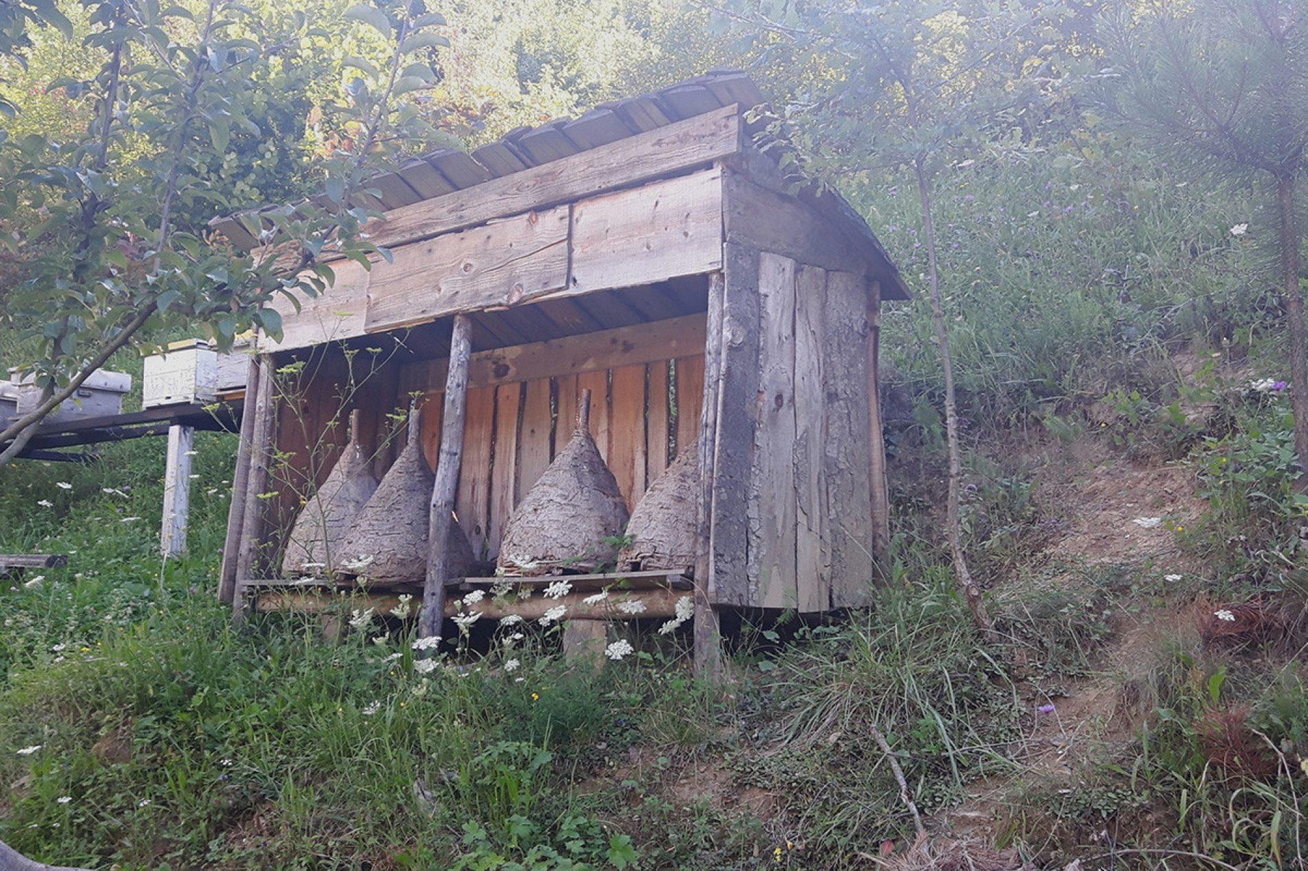 Prije jednog vijeka Bosna bila vodeća pčelarska sila u svijetu!