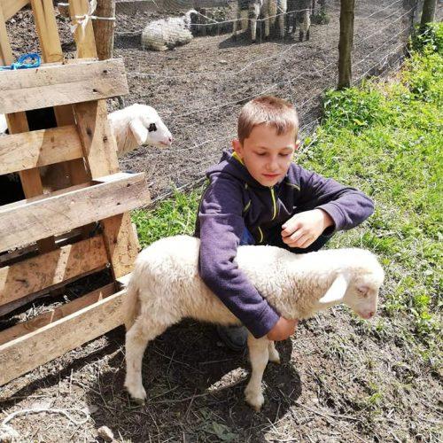 Dječaku Ameru Ibrahimoviću iz Pobuđa uručena donacija od 10 ovaca (Video)