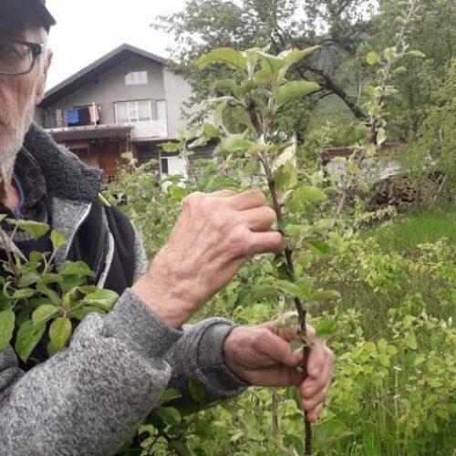 Omer Begović: Manimo se egzotike, uzgajajmo voće našeg podneblja