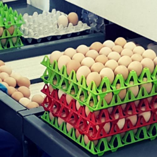 Odobren izvoz jaja iz Bosne i Hercegovine u EU