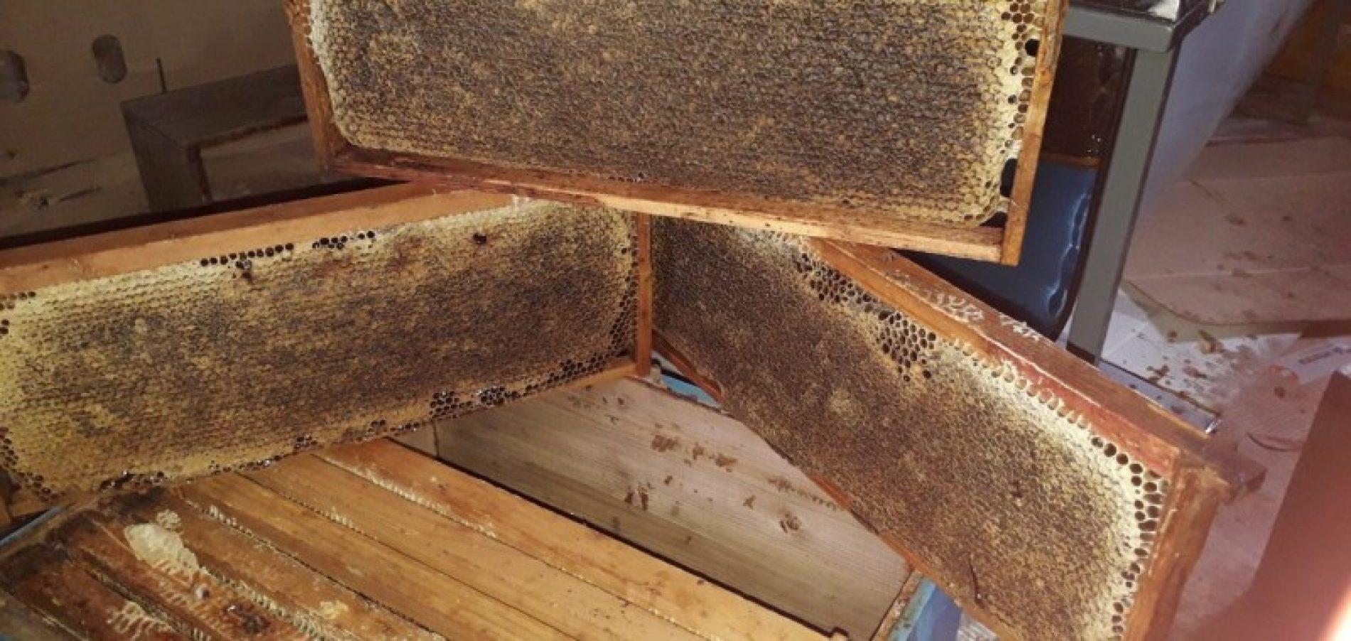 Udruženje 'Vrijesak' čuva tradiciju pčelarstva u Živinicama