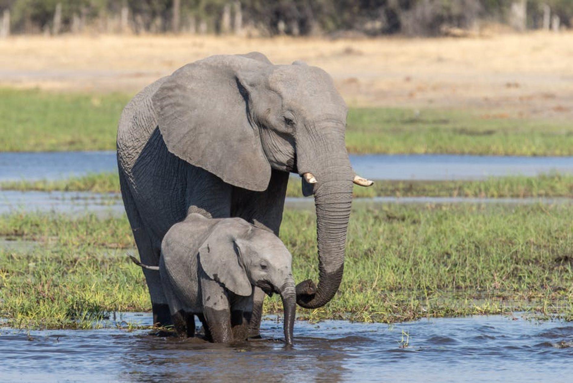 UN zabranio premještaj afričkih slonova iz divljine u zoološke vrtove