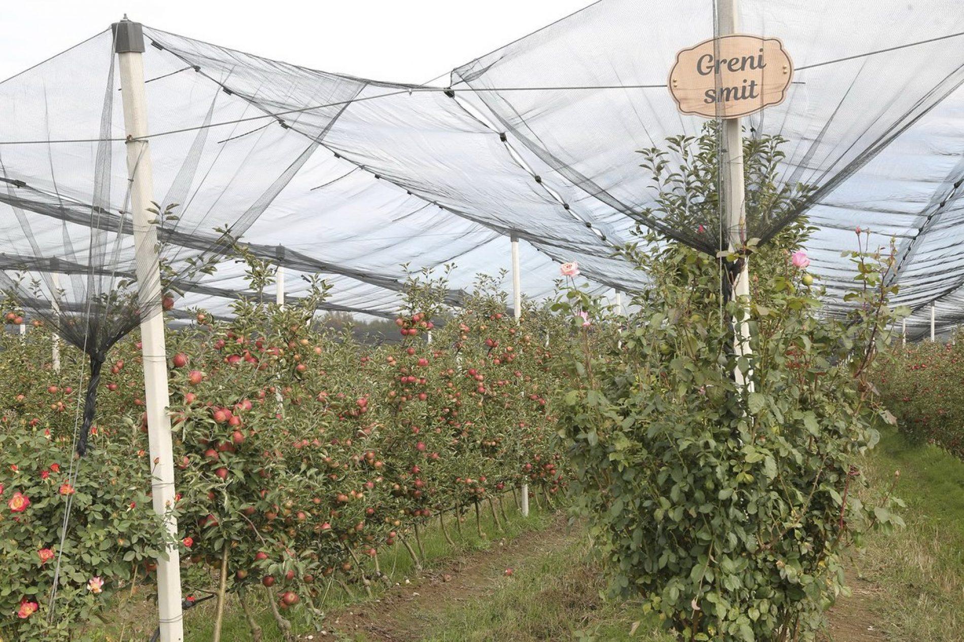 Investicije iz dijaspore: U Prijedoru otvorena hladnjača kapaciteta do 200 tona