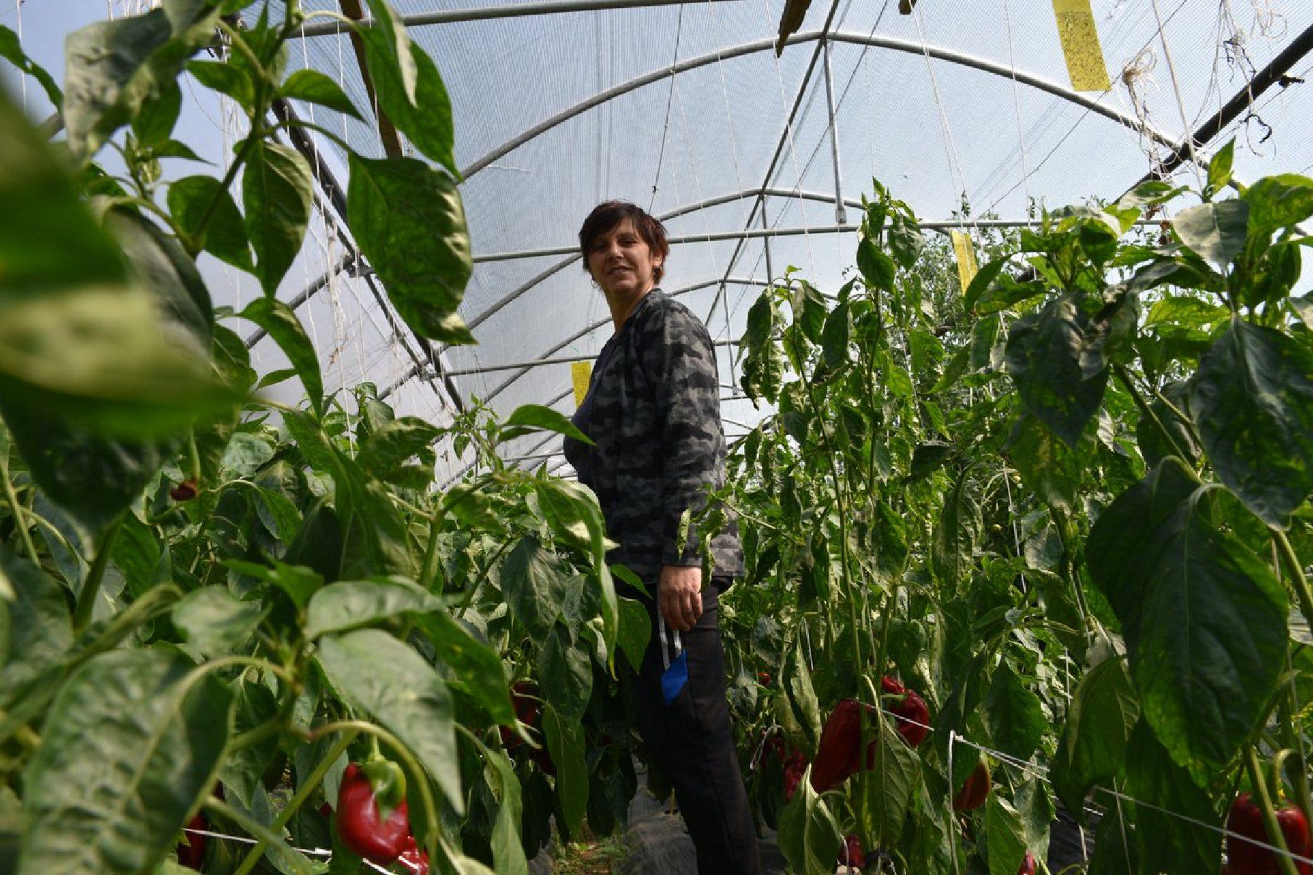 Priprema zimnice: Porodica Kunovac iz Ustikoline ima pune ruke posla
