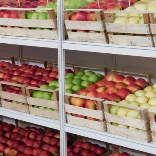 Jabuke i kruške iz Bosne i Hercegovine ponovno u Rusiji